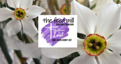 feed mill february specials